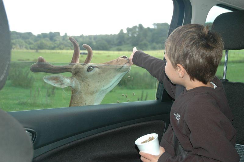Hello Bambi 2